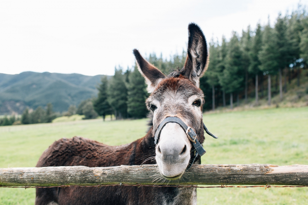 Photo of property: Barney the donkey
